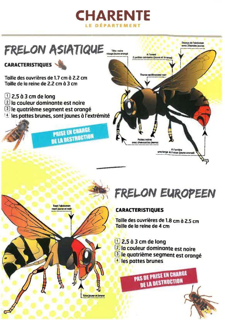 Fiche descriptive du frelon asiatique et du frelon européen