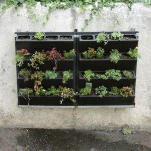 Mur végétal de l'école Jean Moulin à Soyaux