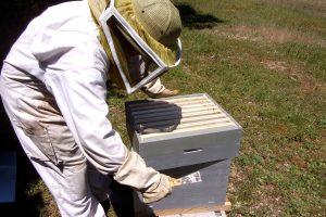 Récolte du miel au Rucher communal de Soyaux