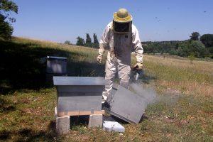 Enfumage d'une ruche du Rucher communal