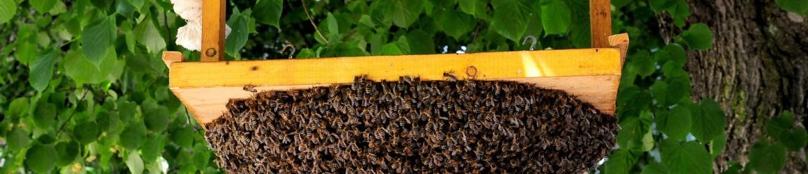 Protégeons les abeilles