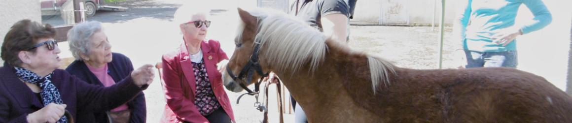 Equi-Seniors : du cheval à tout âge