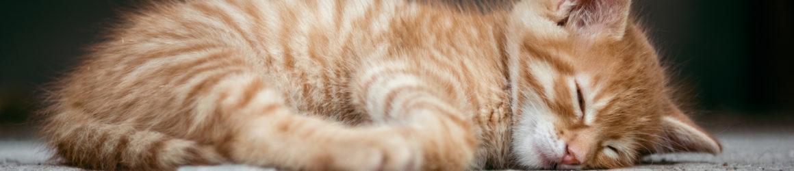 Bilan de la campagne de stérilisation des chats errants