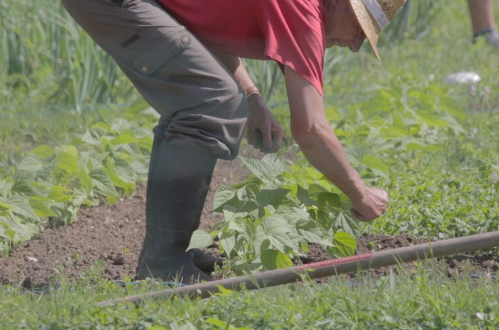 jardinier - Le Potager d'à Côté