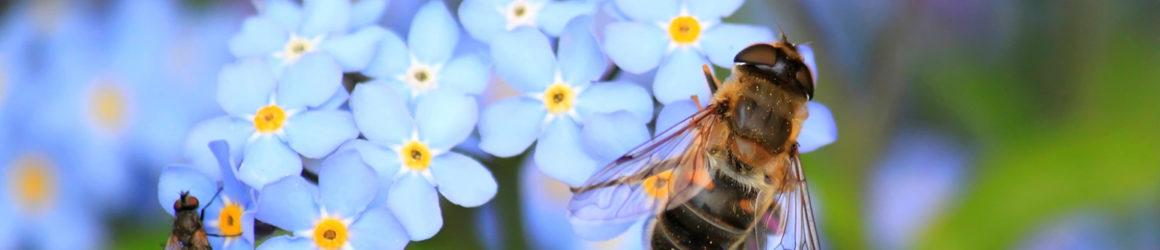 Protégeons nos abeilles !