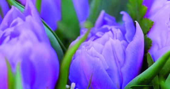 fleurs violettes, tri des déchets dans les cimetières